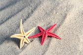 Seastar — Stock fotografie