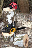 Chainsaw, safety equipment and cutting tree — Stock Photo