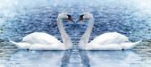 Two swan under snowfall. — Stock Photo