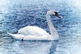 White Swan under snowfall — Stock Photo