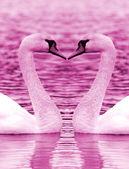 Swan heart — Stock Photo