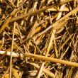Hay or straw macro — Stock Photo