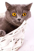 The cat is lying in a basket on a white background — Stock Photo