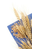 Ears of wheat on napkin — Stock Photo
