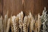 Ears of cereals on wood — Stock Photo
