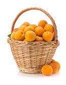 Apricot on white background — Stock Photo