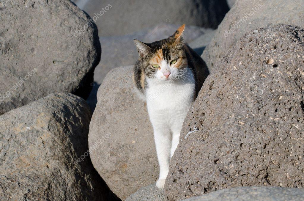 野生动物照片-猫