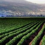 Travel Photos of Israel - Galilee — Stock Photo #12579394