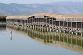 Israel Nature and Wildlife - Lake Hula — Stock Photo