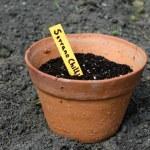 Chili Pepper Seedling — Stock Photo #12869456