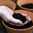 Planting new plants - Foto Stock