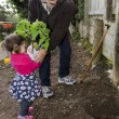 Grandpa and grandchild planting tomato plant — Stock Photo #12891505