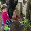 Stock Photo: Grandpa and grandchild planting tomato plant