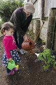 Grandpa and grandchild planting tomato plant — 图库照片
