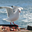 Seagull fly above the sea — Stock Photo