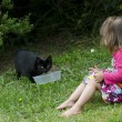 Little girl plays with a cat — 图库照片