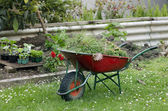 Home gardening — Stock Photo