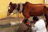 Altes pferd — Stockfoto