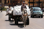 Donkey Chariot in Luxor Egypt — Stock Photo