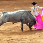 ������, ������: Bull fight in Plaza de Toros Bull Ring Mexico City