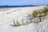 Henderson Bay in Northland New Zealand — Stock Photo