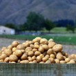 Постер, плакат: Potatoes field
