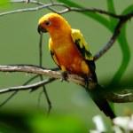 Parrot — Stock Photo #22419871