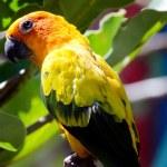 Parrot — Stock Photo #22419907