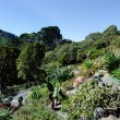 Wellington Botanic Garden — Stock Photo