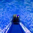 The Ice tunnel of Kelly Tarltons sea world — Stock Photo