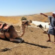 camel ride and desert activities in the judean desert israel — Stock Photo