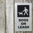 Dog on leash — Stock Photo