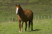 Stadnina koni — Zdjęcie stockowe