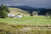 Koyun çiftliği — Stok fotoğraf