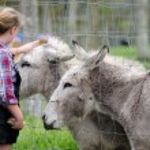 Farm Animals - Donkey — Stock Photo