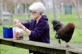 Farm Animals - Chicken — Stock Photo