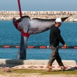 15-meter female whale died in Ashkelon harbor — Stock Photo #27474011