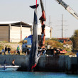 15-meter female whale died in Ashkelon harbor — 图库照片