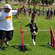 Stock Photo: Dog Competition and Taming Challenge