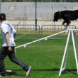 Dog Competition and Taming Challenge — Stock Photo #27485681