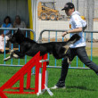 Dog Competition and Taming Challenge — Stock Photo #27485793