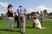 Dog Competition and Taming Challenge — Stock Photo