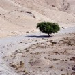 The Judean Desert - Israel — Stock Photo