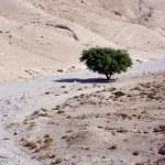 The Judean Desert - Israel — Stock Photo #27871707