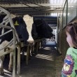 Farm girl in cow milking facility — Stockfoto