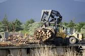 Wood Industry - NZ Wood — Stock Photo