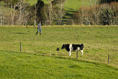 Dairy industry - farmland — Foto Stock
