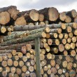 Stock Photo: New Zealand Forest Products