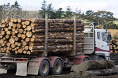 New Zealand Forest Products — Stock Photo