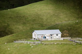Sheep farm in New Zealand — Stock Photo